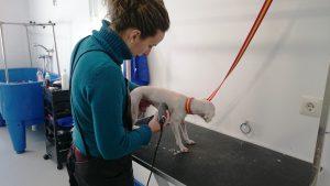 clinica veterinaria pequesalud fuente de cantos (6)